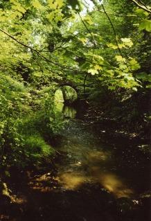 an old packhorse bridge, river, near lodsworth